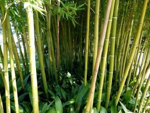 Bambus-Parkett - Bambushalme